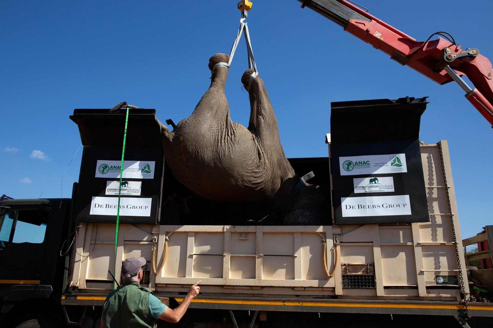 Moving Giants